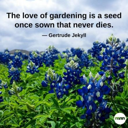 the20love20of20gardening20is20a20seed20once20sown20that20never20dies-838x0_q80