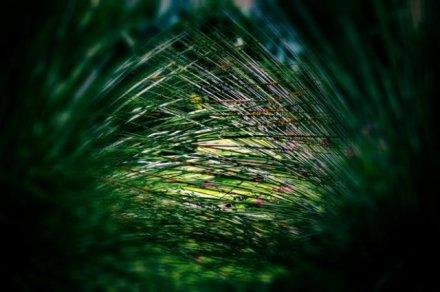 life-threads-strands